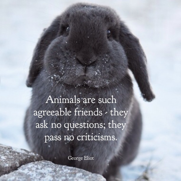 animals-are-such-agreeable-friends-george-eliot-daily-quotes-sayings-pictures